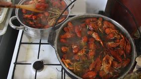 Crayfish boil in a pot. Cooking crayfish with dill and salt stock video
