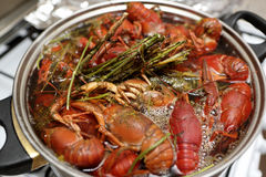 Cooking of crayfish with herb Royalty Free Stock Photo