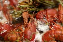 Cooking crayfish Stock Image