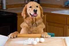 Cooking dog Royalty Free Stock Photography