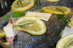 Cooking Dorado fish. With lemon and spices before baking Royalty Free Stock Image