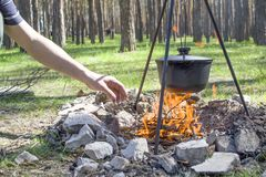 Cooking on a fire at spring. Close view of caldron over the campfire. Pot over the fire in the forest. Cooking on a fire. Spring camping concept. Opening of the stock images
