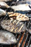 Cooking fish. At barbecue outdoor Stock Image