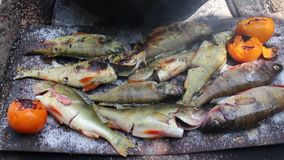 Cooking fish on the grill stock video footage