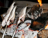 Cooking fish grilled over hot coals bonfire Stock Photography