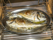Cooking fish in oven at home kitchen. Whole cooking fish in oven at home kitchen Royalty Free Stock Image