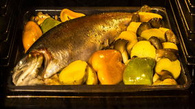Cooking fish and vegetables in baking oven stock video footage