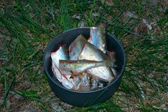 Cooking fish Royalty Free Stock Image