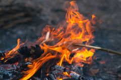 Cooking food at a campfire in the open air. Stock Images