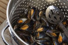 Cooking Fresh Mussels - Moules Marinieres Royalty Free Stock Image