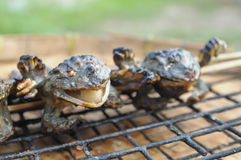 Cooking of grill frog Stock Images