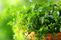 Cooking herbs. Royalty Free Stock Images