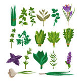 Cooking Herbs Collection Stock Photos