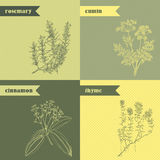 Cooking herbs and spices. Rosemary, thyme, cinnamon, cumin. Royalty Free Stock Images