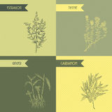 Cooking herbs and spices. Thyme, estragon, ginger, cardamom. Stock Photography