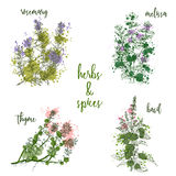 Cooking herbs and spices in watercolor style . Rosemary, melissa, basil, thyme. Stock Photo