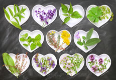 Cooking and homeopathy with fresh herbs Stock Photos