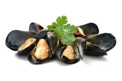 Cooking ingredient series mussel. available for clipping work. On the white background Royalty Free Stock Photography