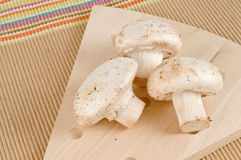 Cooking ingredients, three white mushrooms Royalty Free Stock Photography