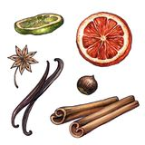 Cooking ingredients, watercolor illustration, dried orange, lime. Citrus fruit, cinnamon and vanilla sticks, anise, hazelnut, winter holiday clip art on white vector illustration
