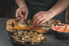 Cooking Middle Eastern food - dolma Royalty Free Stock Photography