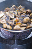 Cooking mushrooms Stock Photography