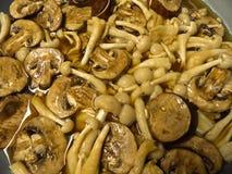 Cooking mushrooms. Braising two kinds of mushroom, crimini and white shimeji Royalty Free Stock Photo