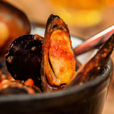 Cooking mussel opens in tomato sauce, spicy seafood, rich source of easily digestible protein Royalty Free Stock Photos