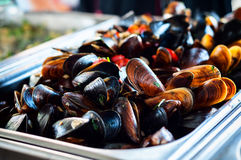 Cooking mussels in a pan Stock Image
