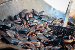 Cooking mussels in a pan Royalty Free Stock Image
