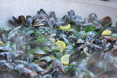 Cooking mussels Royalty Free Stock Images