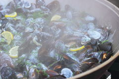 Cooking mussels Stock Photography