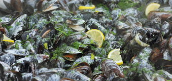 Cooking mussels Stock Images