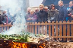 Cooking onion on bonfire during Calcotada Stock Photo