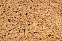 Cooking. Piece of rye bread in details. Bakery. Half of rye bread in details Royalty Free Stock Photo