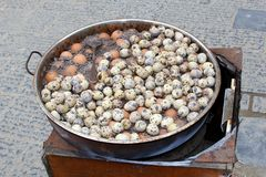 Cooking pot with quail eggs, a deluxe delicacy Royalty Free Stock Photo