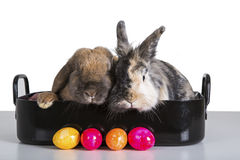 Cooking rabbits Royalty Free Stock Photography