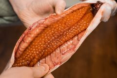 Cooking Salmon and red caviar for food. Pink Salmon. Humpback salmon royalty free stock photography