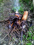 Cooking of sausages in the forest on the fire - Vertical photo. Preparation of food in natural conditions with improvised means Royalty Free Stock Photo