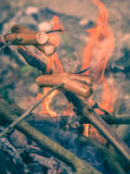 Cooking sausages on sticks Stock Images