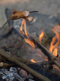 Cooking sausages on sticks Royalty Free Stock Images