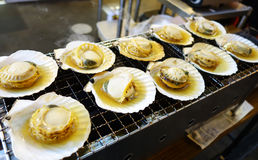 Cooking scallops on the grill Royalty Free Stock Photo