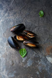 Cooking seafood, mussels in shell Royalty Free Stock Photography