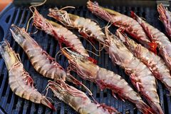 Cooking shrimp on the grill Stock Photography
