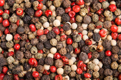 Cooking spice variation dry small peppercorn Royalty Free Stock Image
