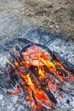 Cooking white mushrooms with tomatoes in a pan on a fire in the spring forest royalty free stock images