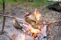 Cooking a whole chicken over a campfire Royalty Free Stock Photo