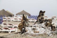 Cookout в пляже Стоковое Изображение