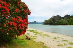 Cooks Beach, New Zealand royalty free stock photo