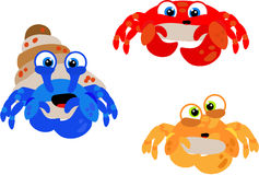 Cooky crabs. Crazy crabs looking for an underwater home Stock Image